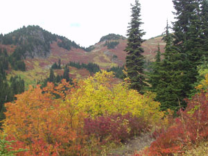 Fall Foliage from Tomyhoi Trail